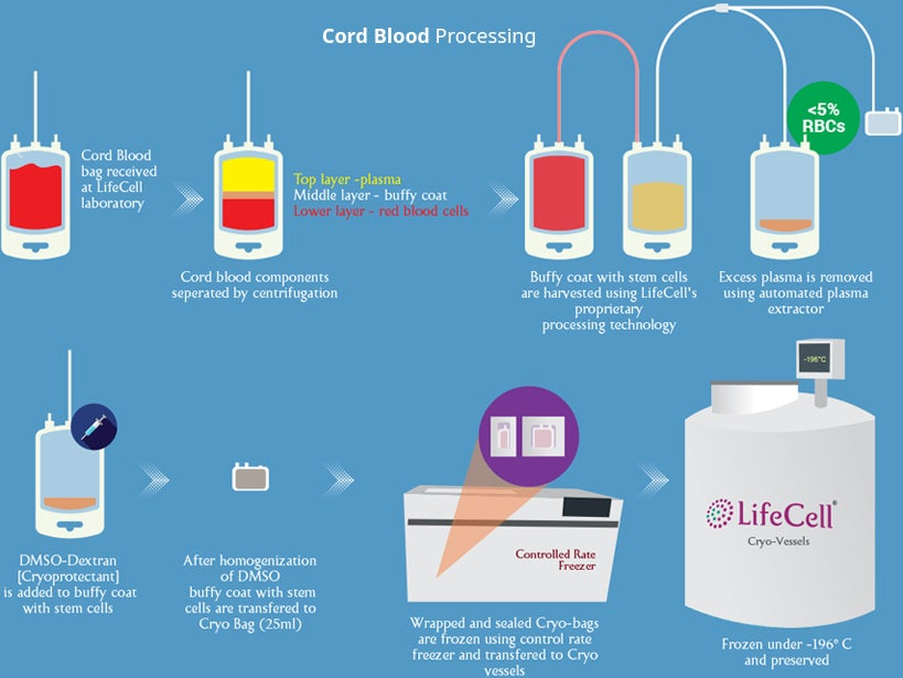 cord blood processing